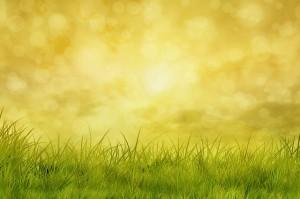 meadow-331335_640