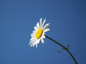 flower-193452_640